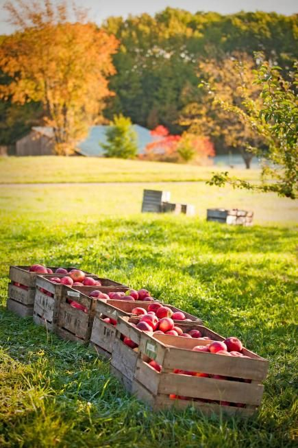 48 best images about illinois things to do on pinterest for Amish country things to do