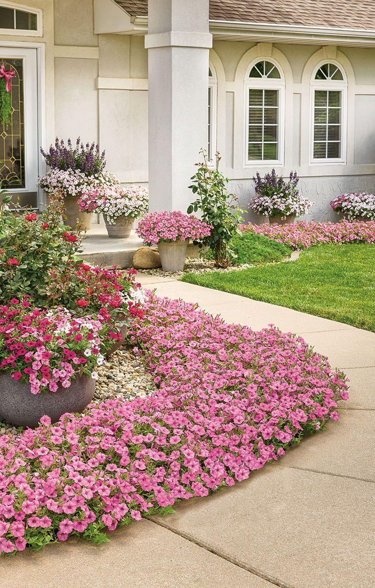 Supertunia Vista Bubblegum Petunia Hybrid Front Yard Landscaping Design Front Yard Landscaping Small Garden Landscape