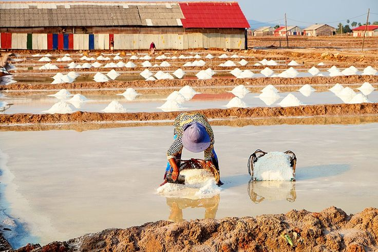 Things to do in Kampot and Kep: Kampot Salt Fields