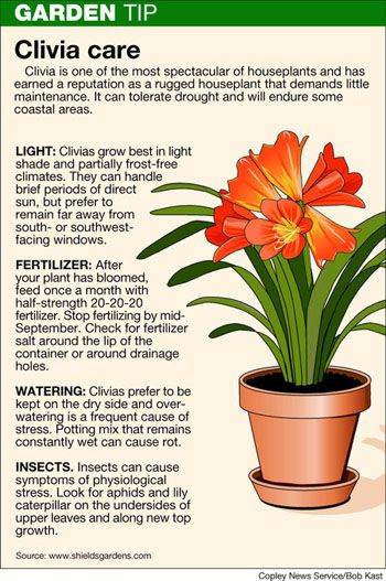 115 best images about south african clivias on pinterest for Indoor gardening meaning