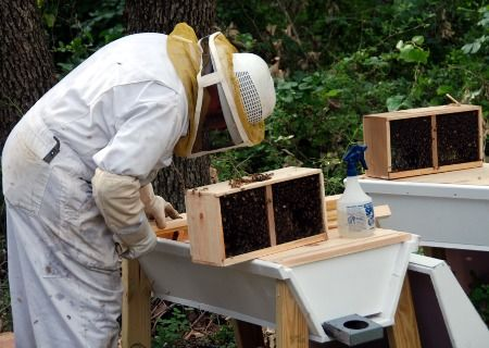 how to get rid of a small beehive