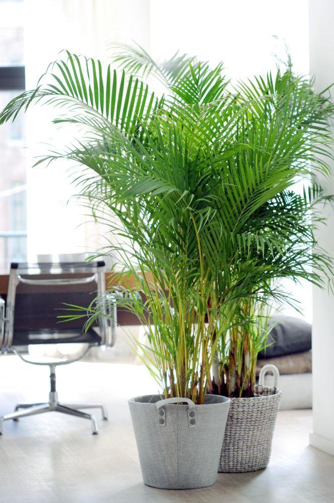 Praxis | Heb je een kamer met weinig kleur? Met een fel groene kamerplant komt je kamer helemaal tot zijn recht!