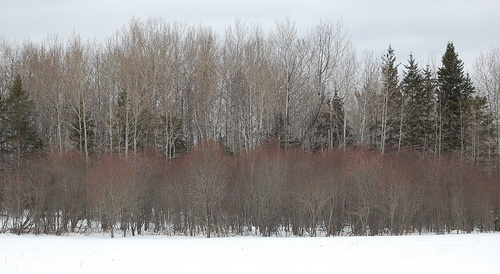 Tree crowns, Pine County MN  Like, repin, share Thanks!