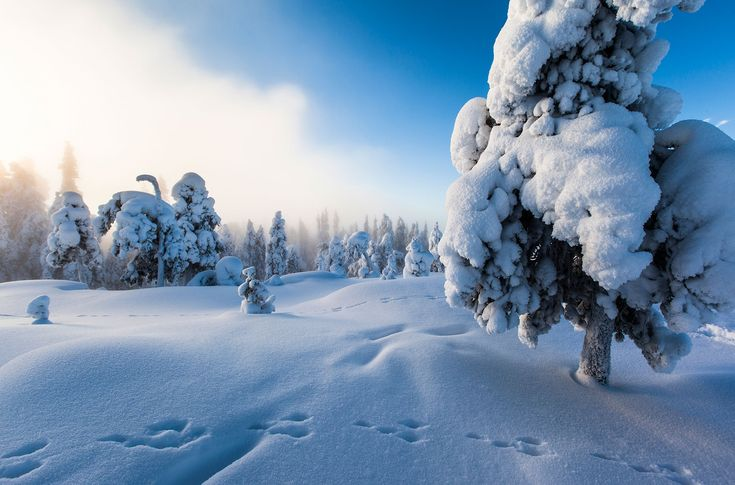 Experience the four - or even eight - seasons of Rovaniemi, Midwinter -Rovaniemi, Lapland, Finland
