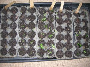 Use Eggs Cartons to Start Your Seedlings