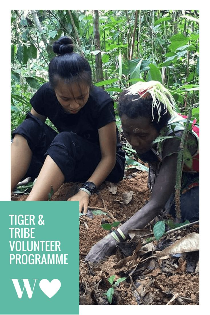 Volunteering with tribes & tigers in the Malaysian jungle