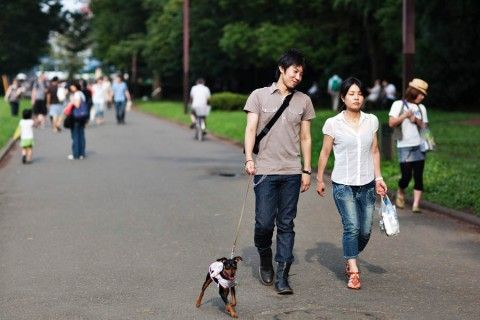 People Watching on a Typical Sunday at Tokyos Yoyogi Park