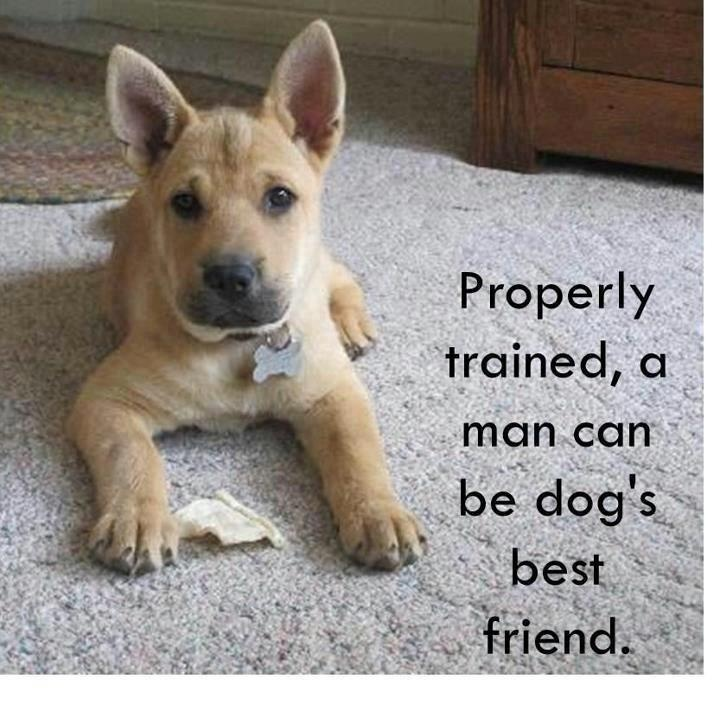 Image result for inspirational quotes dogs