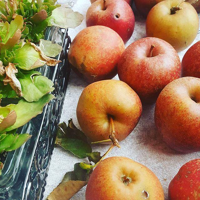 Fall Apples. I love the beautiful apples. Do you pick apples this fall?  #soulguidecom #apples #lovingfall #pickingapples