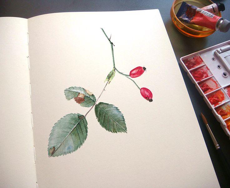 Rose hips by Alina Draguceanu.  Watercolour on paper (sketchbook).  Acuarelă pe caiet de schițe.