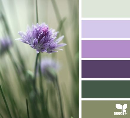 chive blossom - all my favorite colors in one?!?