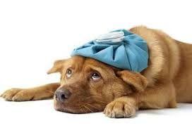 PODEROSAS ORACIONES ESPIRITUALES Y MAGICAS: Poderosa Oracion a SAN FRANCISCO DE ASIS para que un ANIMAL se recupere de una enfermedad