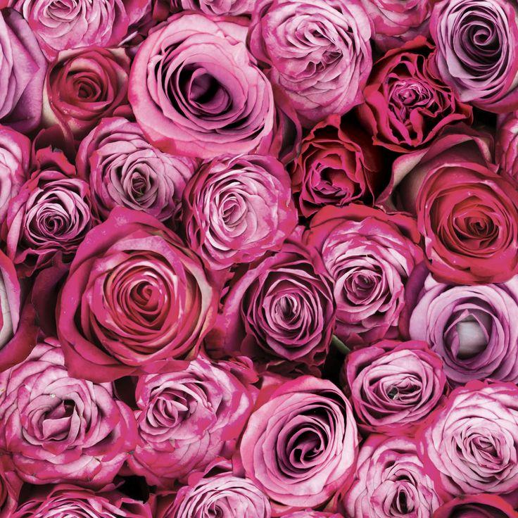 Best 25 Flower Desktop Wallpaper Ideas On Pinterest: Best 25+ Rose Wallpaper Ideas On Pinterest