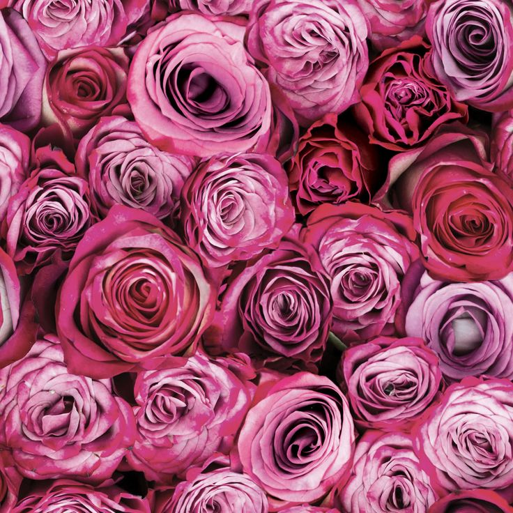 Best 25+ Rose Wallpaper Ideas On Pinterest