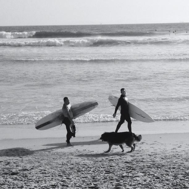 Places To Visit Huntington Beach Ca: Huntington Beach Doggie Beach, Huntington Beach