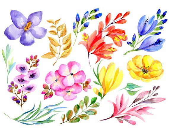 Watercolor Floral Clipart 14 Bright Flowers Leaves Branches