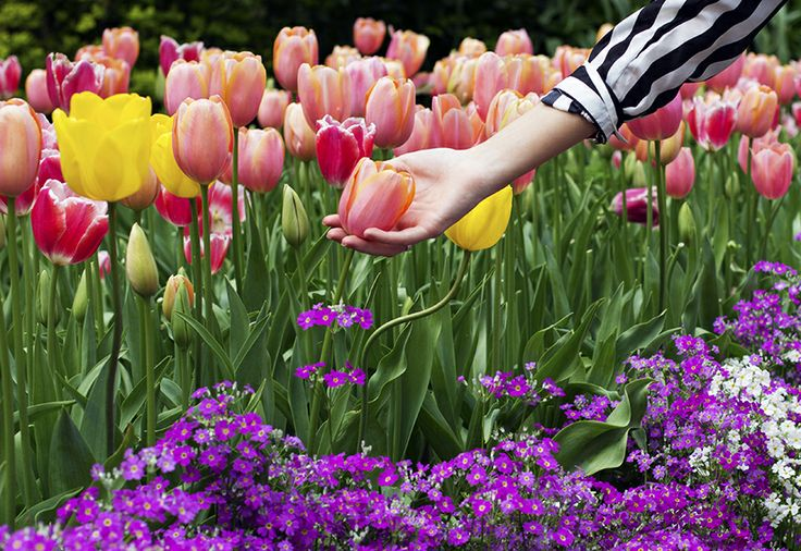 Pretty tulips and Spring blooms.