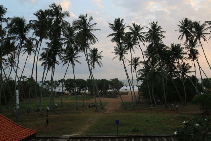 Шри-Ланка. О людях https://foodmag.me/shri-lanka-o-lyudayah  Цейлон он же Шри-Ланка удивительная страна. С одной стороны дикая, еще не совсем развитая для туристов, в то же время много шикарных дорогих отелей. Население представлено в большем проценте это сингалы, тамилы. Язык сингальский и тамильский они являются официальными и национальными на Шри-Ланке. Исповедуют в основном буддизм, отсюда и много буддийский храмов.Люди здесь приветливы и доброжелательны, они еще не извращены туристами…