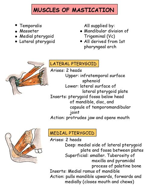 Instant Anatomy - Head and Neck - Muscles - Mastication