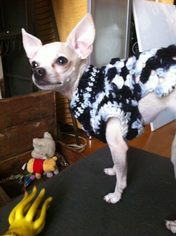 458 Best Images About Crochet Pets On Pinterest