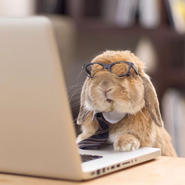 Pin for Later: This Adorable Bunny Dresses Better Than You Could Ever Hope To Working hard or hardly working?