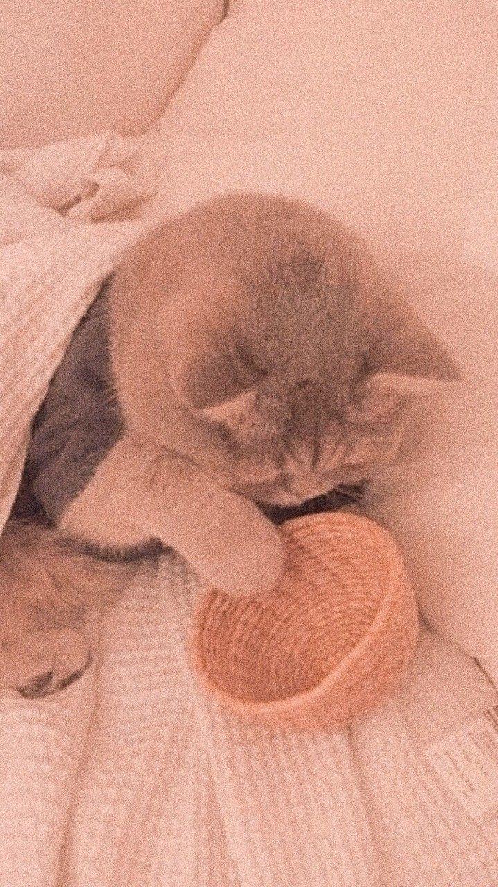 ᴡᴀʟʟᴘᴀᴘᴇʀs 벽지 おしゃれまとめの人気アイデア Pinterest Sophia かわいい イザナミ 動物