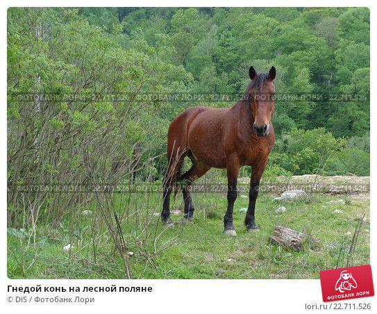 Гнедой конь на лесной поляне © DiS / Фотобанк Лори