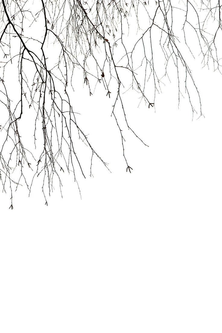 winter birch (mary jo hoffman)