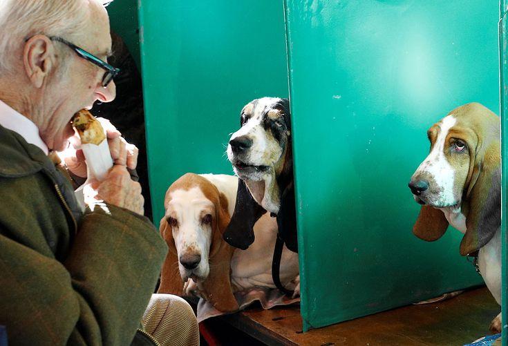 За кулисами собачьей выставки Crufts Dog Show в Бирмингеме