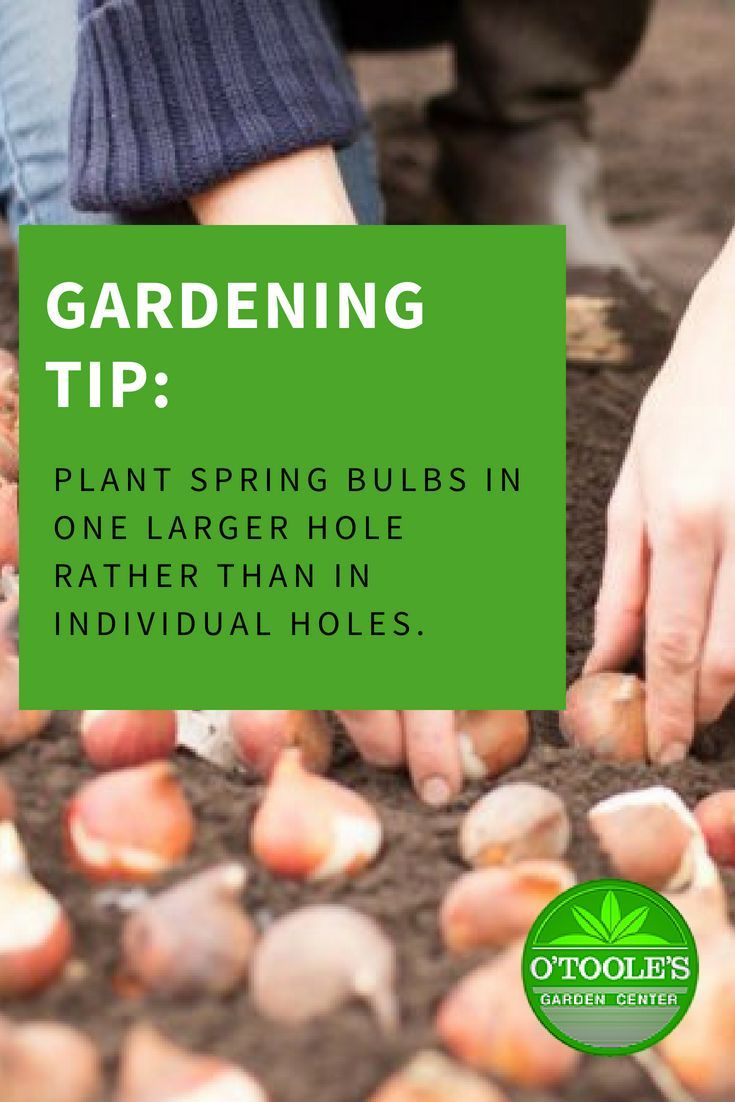 Plant Your Spring Bulbs In One Larger Hole Rather Than In Individual Holes You Will Get A Bigger Impact Garde Gardening Supplies Spring Bulbs Gardening Tips