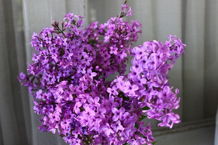 Aunt's flowers!