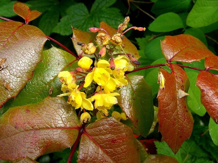 Hidden treasure.: Hidden Treasure, Botanical Gardens