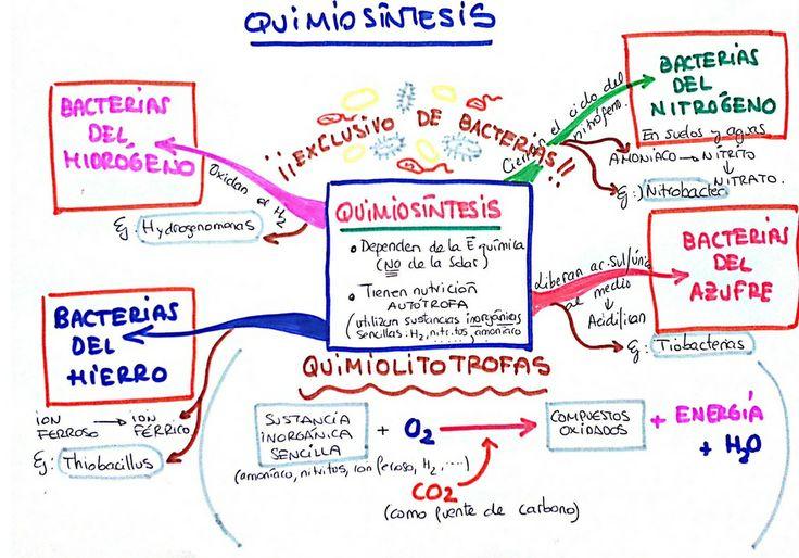 Quimiosíntesis | MIS ESQUEMAS Y MAPAS MENTALES | Pinterest