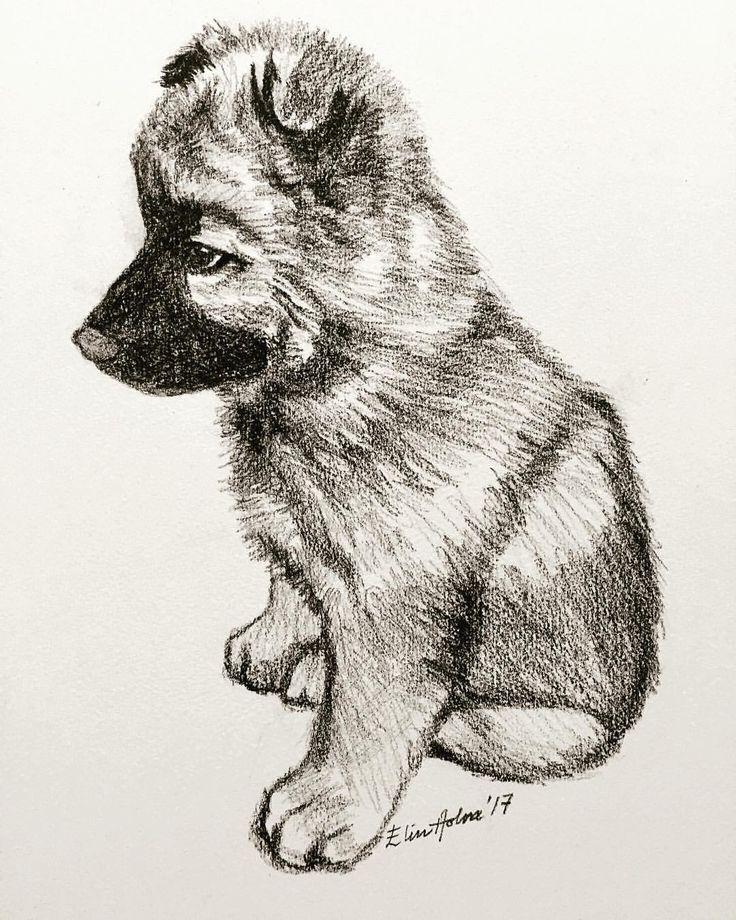 Erasier puppy - Elin Holm pencildrawing