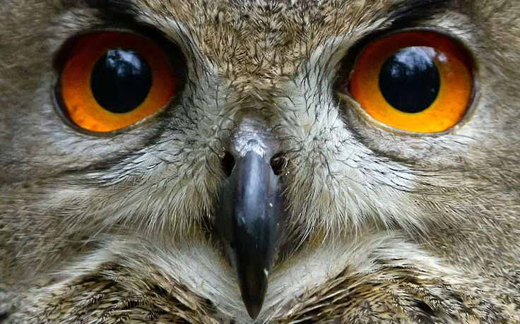 An eagle owl is seen at the Schwarze Berge wildlife park in Hamburg, northern Germany