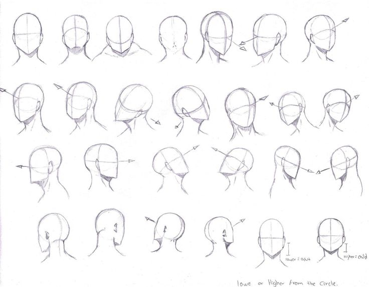 Hi, This is a reference of different angles of the head, Hope it helps.