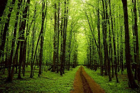 ...el bosque estaría muy silencioso si sólo cantasen los pájaros que mejor cantan...  Henry Van Dyke