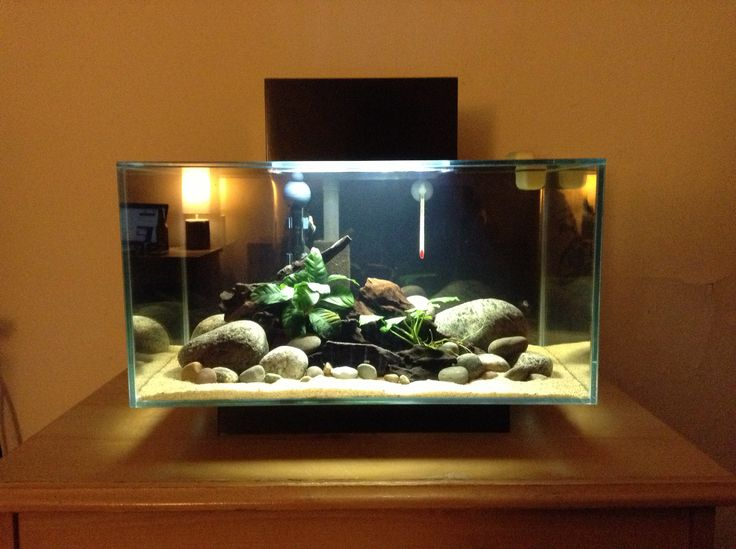 Fluval edge 6 gallon aquarium fluval edge pinterest for Fluval fish tank