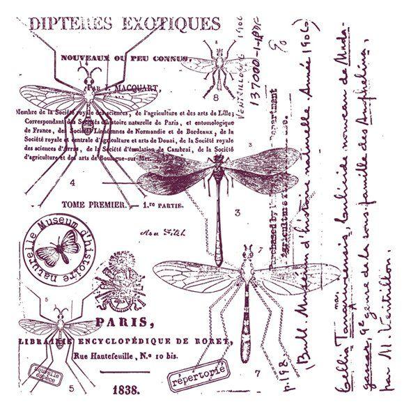 Aladine Stampo Maxi Botanisch bestaat uit één stempel. Afmeting 12 cm bij 12 cm. Groot formaat stempels gemaakt van stevig schuimrubber waardoor je een mooie en egale stempelafdruk kunt maken.