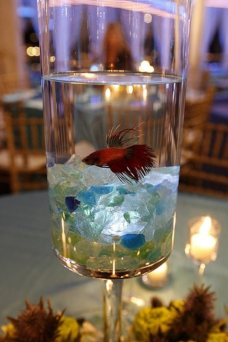 Fish With Beach Glass Centerpieces Amp Table Decorations Aquarium Wedding Fish Centerpiece