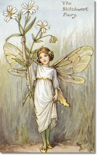 Cicely Mary Barker - Flower Fairies of the Spring - The Stitchwort Fairy Painting