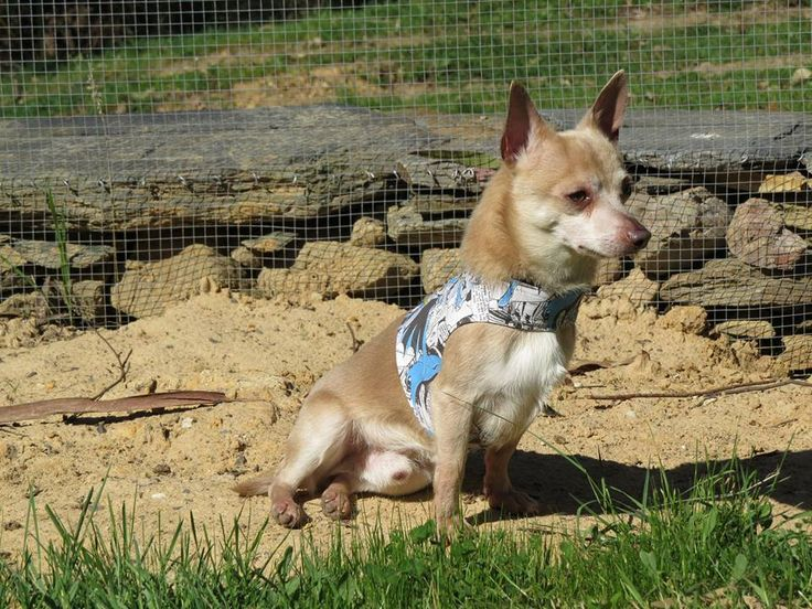 Another photo of the gorgeous moi lookin' a right stud muffin in my super pawesome harness!