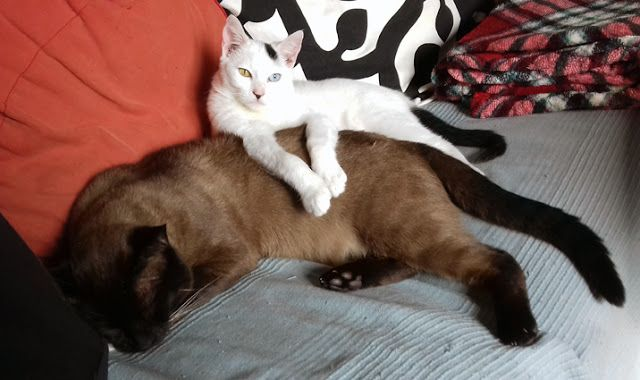 LUIS DESENHA: o sono dos gatos - Pintinhas e Tobias