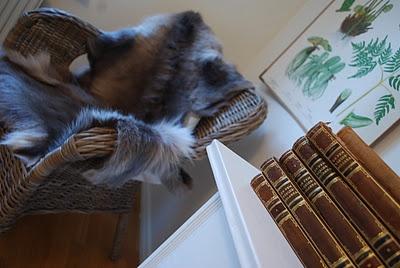 Renskinn i korsstol, antika böcker och en snygg ört-tavla!