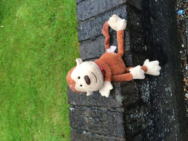 Found on 28 Jun. 2016 @ Preston Park Avenue, Brighton. Hello I found this guy in the rain today . He still looks happy but I think he is missing his owner. He has a tag on him saying Rohan. Visit: https://whiteboomerang.com/lostteddy/msg/4ft05g (Posted by Kate on 28 Jun. 2016)