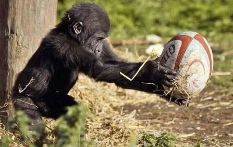 everyone loves rugby !