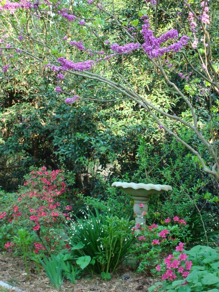 Woodlands Gardens   Azaleas, Snowdrops, Irises