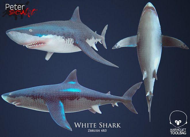 White shark 2