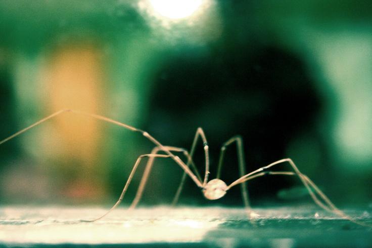 spider: Spiders, Outdoor