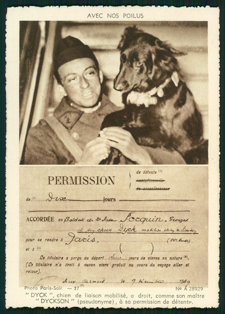 Dyck Messanger Belgian Shepherd War Dog Original Old WW2 WWII Postcard | eBay